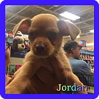 Adopt A Pet :: Jordan - Los Angeles, CA
