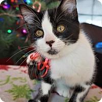 Adopt A Pet :: Sully - Roanoke, VA