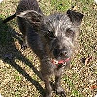 Adopt A Pet :: Lincoln - Orange Cove, CA