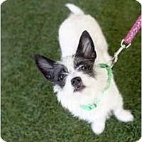 Adopt A Pet :: Bridgett - Mission Viejo, CA
