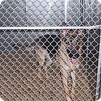 Adopt A Pet :: GUARDIAN - Tully, NY