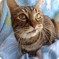 Adopt A Pet :: Bronze (aka. Grimace) - Mesa, AZ