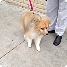 Adopt A Pet :: Suzanne