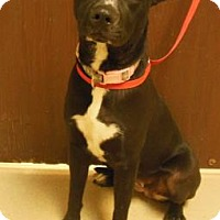Adopt A Pet :: Vicky - Gary, IN