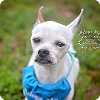 Adopt A Pet :: Señor - Fort Valley, GA