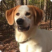 Adopt A Pet :: Tucker - Brattleboro, VT
