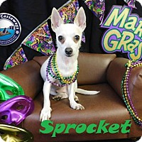 Adopt A Pet :: Sprocket - Arcadia, FL