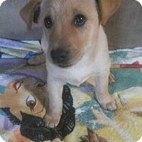 Adopt A Pet :: Zara - New Oxford, PA