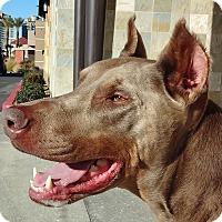Adopt A Pet :: Brutus - Las Vegas, NV