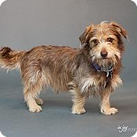 Adopt A Pet :: Charlie - Thousand Oaks, CA