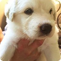 Adopt A Pet :: Kimana - Kyle, TX