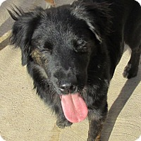 Adopt A Pet :: Toby - San Ysidro, CA