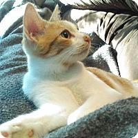 Adopt A Pet :: Rockey (Foster) - Exton, PA