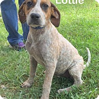 Adopt A Pet :: Lottie - Mountain View, AR