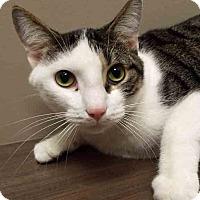 Adopt A Pet :: Dexter - Channahon, IL