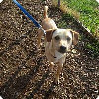 Adopt A Pet :: ROCKY - Urbana, IL