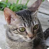 Adopt A Pet :: Sudie - Gonzales, TX