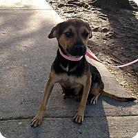 Adopt A Pet :: Dolly - Oviedo, FL