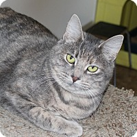 Adopt A Pet :: Ellen - Priest River, ID
