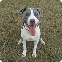 Adopt A Pet :: Malachi - Des Moines, IA
