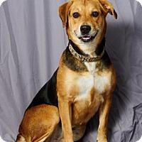 Adopt A Pet :: Roxanna - Tulsa, OK