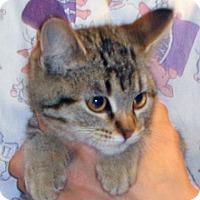 Adopt A Pet :: Sookie - Wildomar, CA