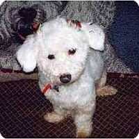 Adopt A Pet :: Tatum - La Costa, CA