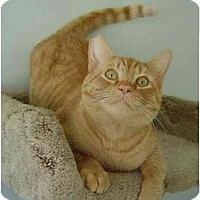 Adopt A Pet :: Buddy - Modesto, CA