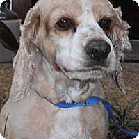 Adopt A Pet :: Blaze - Sugarland, TX