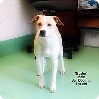 Adopt A Pet :: Buster - Gadsden, AL