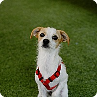 Adopt A Pet :: Leia - Mission Viejo, CA