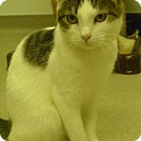 Adopt A Pet :: Elsa - Hamburg, NY