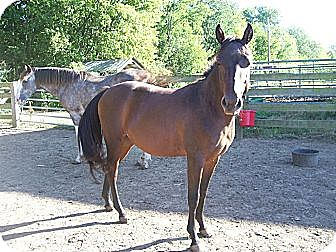 Quarterhorse/Pony - Other Mix for adoption in Lyles, Tennessee - Rosie