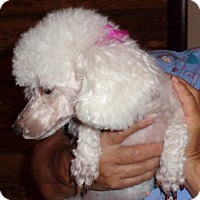 Adopt A Pet :: Candy - Crump, TN