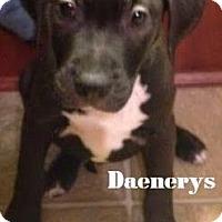Adopt A Pet :: Daenerys - Davison, MI