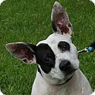Adopt A Pet :: Jiffy