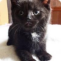 Adopt A Pet :: Caraway - N. Billerica, MA