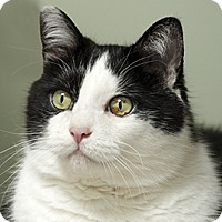 Adopt A Pet :: Franklin - Blackstock, ON