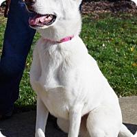 Adopt A Pet :: Alaska - Greensboro, NC