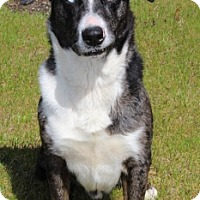 Adopt A Pet :: Willie - Grants Pass, OR