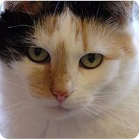 Adopt A Pet :: Bianca - Herndon, VA
