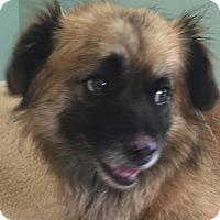 Adopt A Pet :: Kobi - Costa Mesa, CA