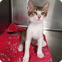Adopt A Pet :: Malibu - Umatilla, FL