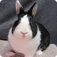 Adopt A Pet :: Poppett - Newport, DE