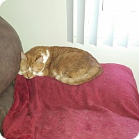 Adopt A Pet :: Garfield - Swansea, MA