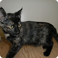 Adopt A Pet :: Brittle - Milwaukee, WI