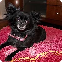 Adopt A Pet :: Meechi - Las Vegas, NV