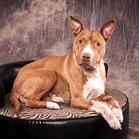 Adopt A Pet :: Annabelle Mumma - Elizabethtown, PA