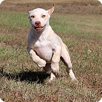Adopt A Pet :: Cashew - Glastonbury, CT
