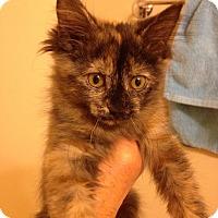 Adopt A Pet :: Cocoa - Fowlerville, MI